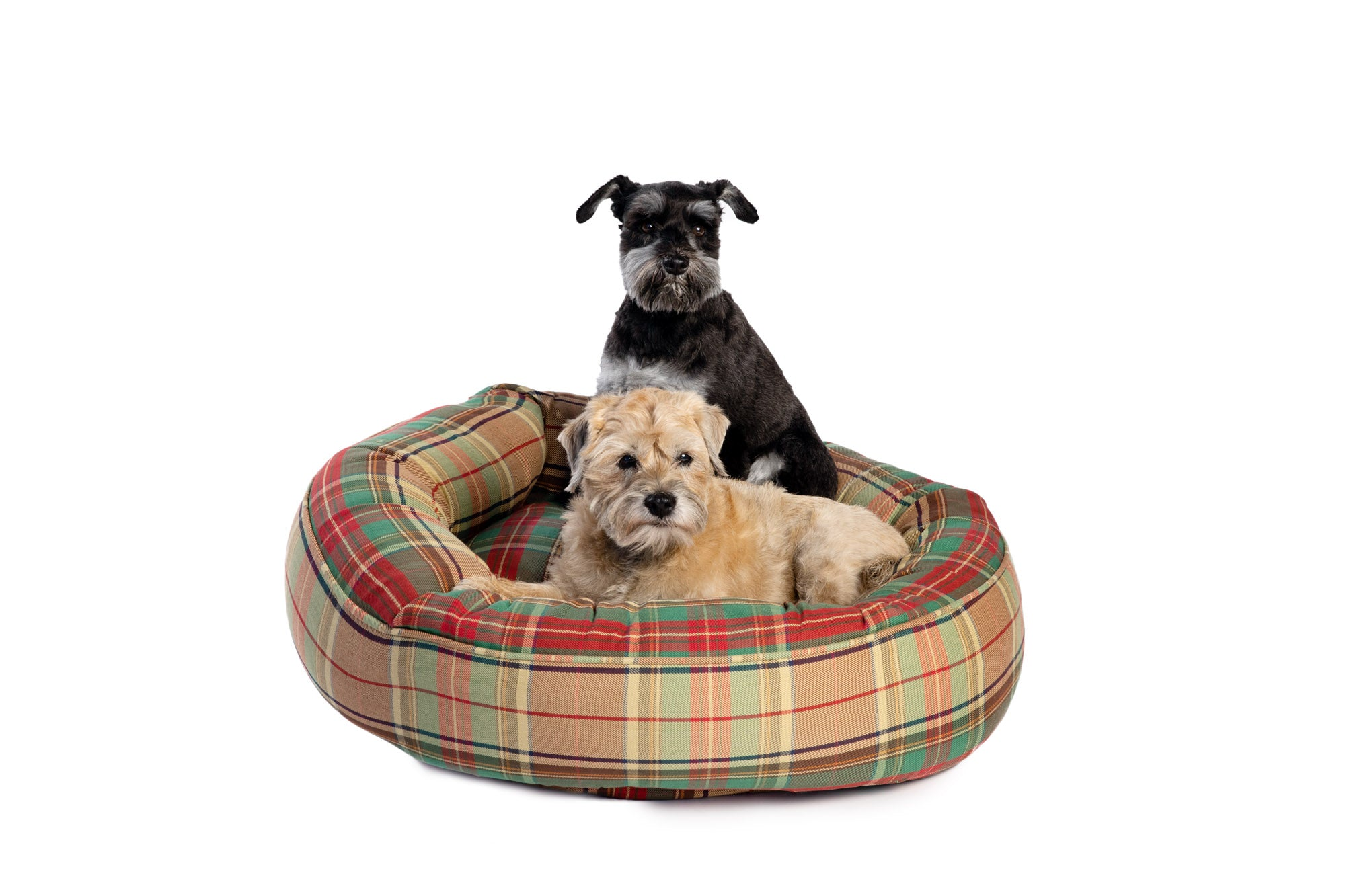 Canine Styles - Cotton Canvas - Ivy League Plaid