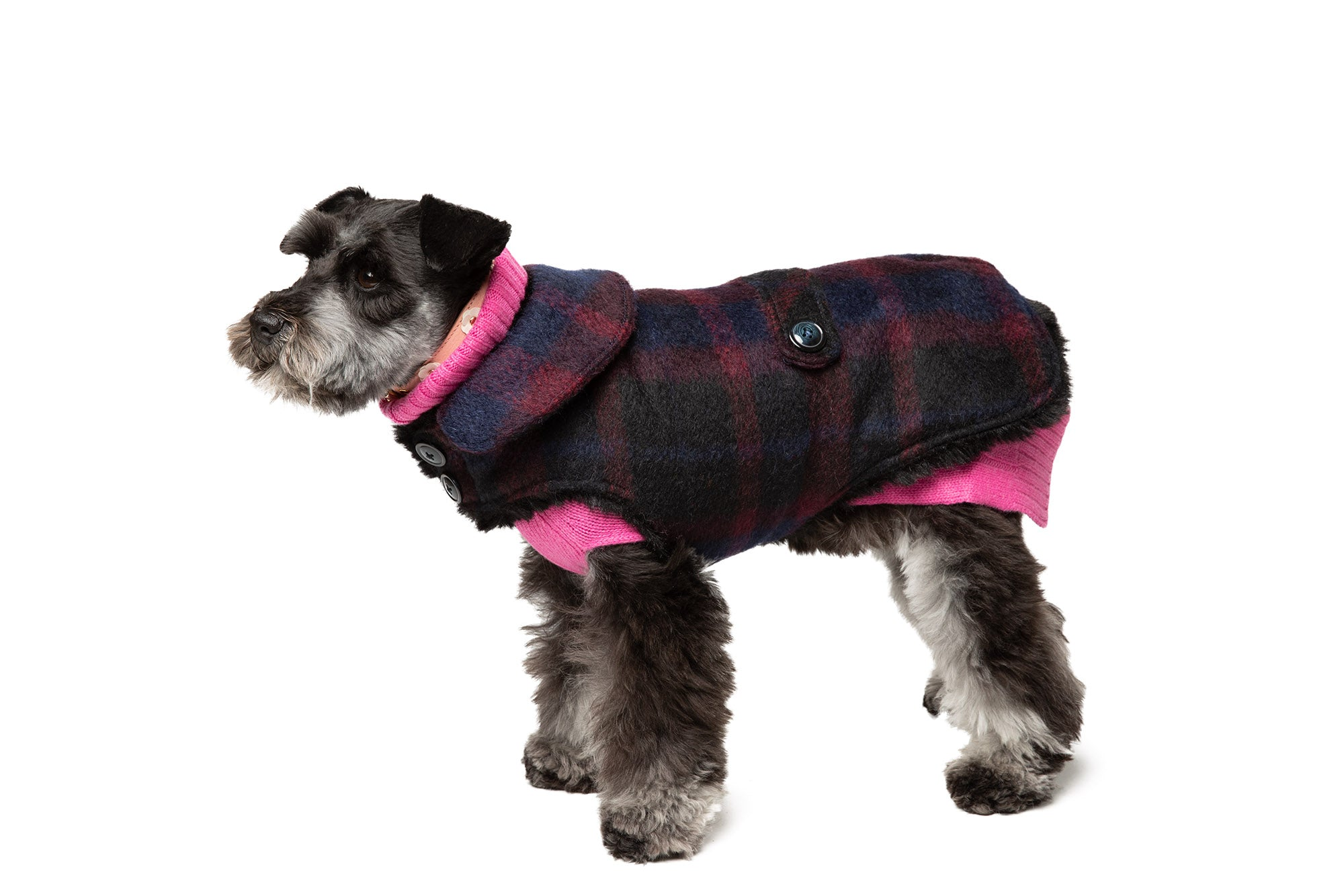 Couture Wool Dog Coat - Navy & Burgundy