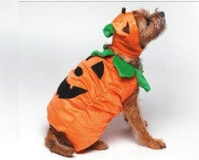 Halloween Costume - Pumpkin Costume - Dog Costume