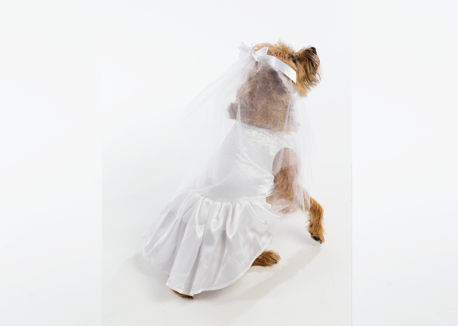 Dog Costume Bride Halloween Costume