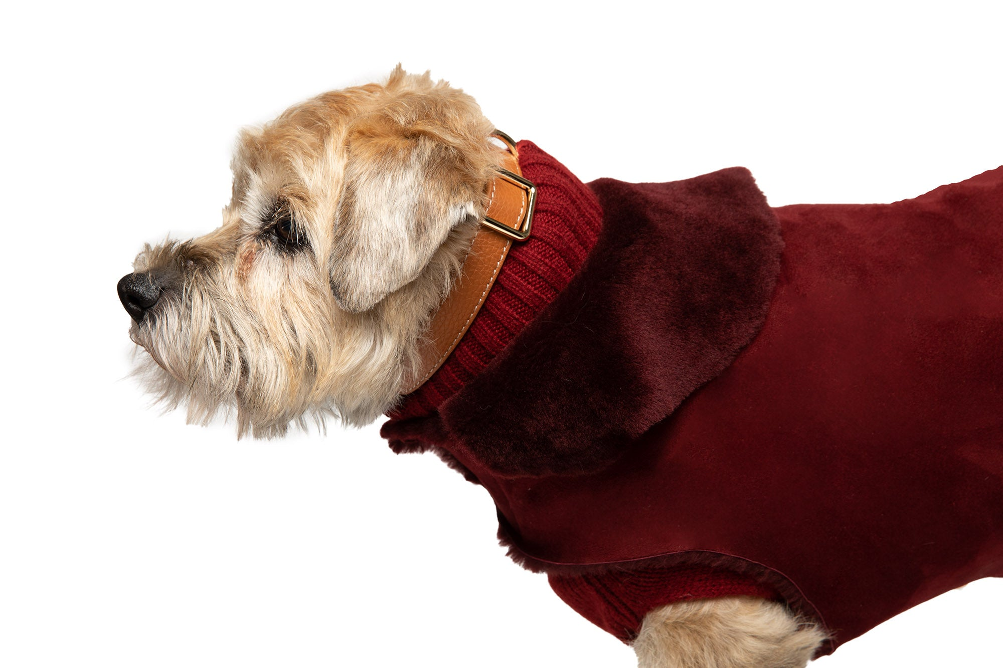 Hand-Cut Shearling Short Haired - Dog Coat - 5 Color Options