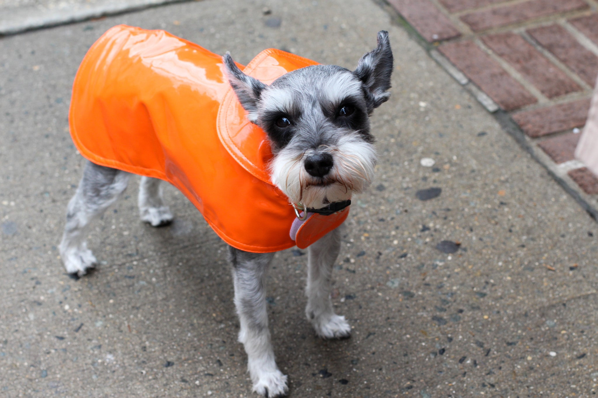 Slickers | Canine Styles |  Raincoats | Dog Coat | 6 Color Options