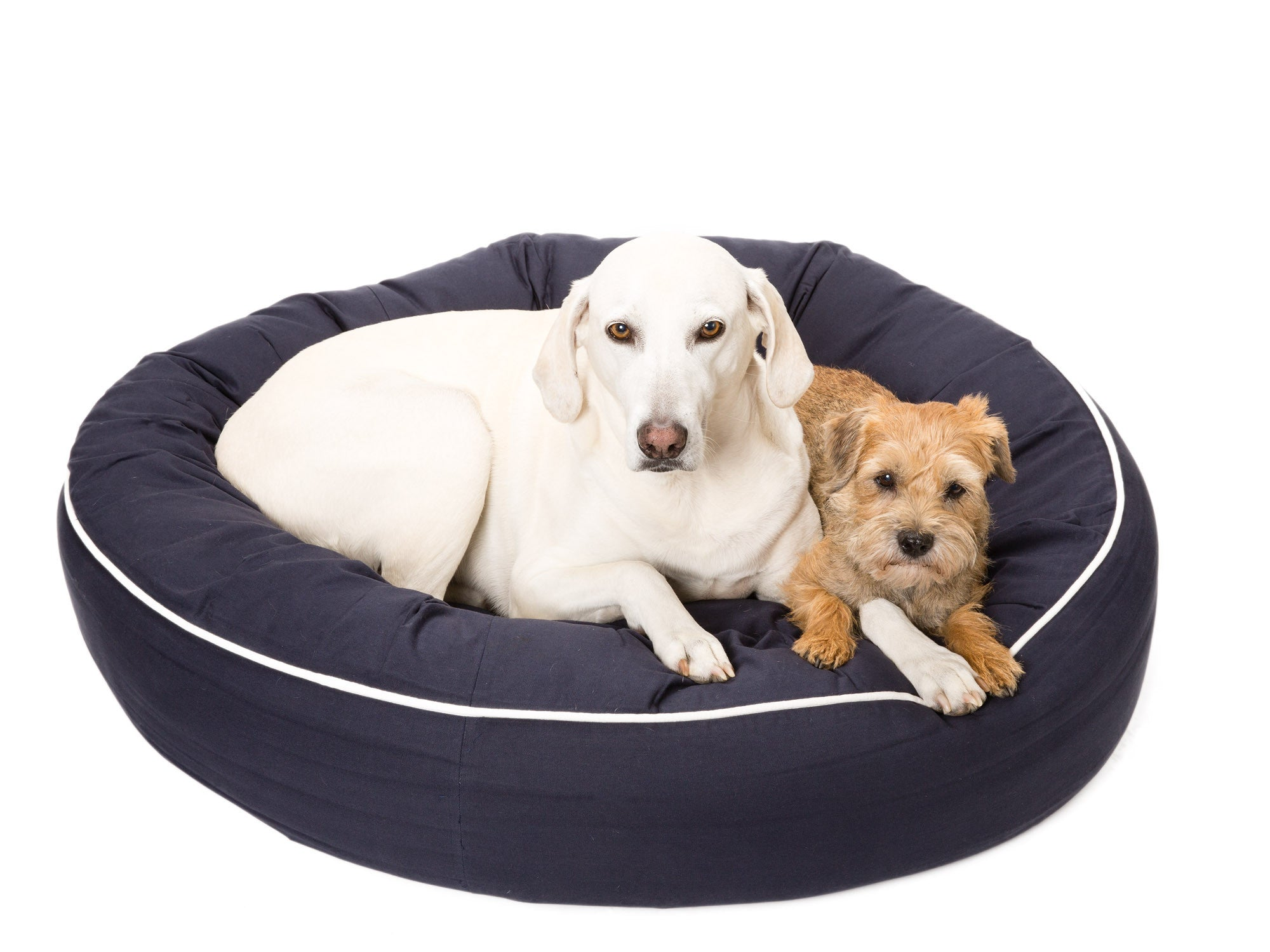 Canine Styles | Cotton Canvas | Solid Color with Off White Piping | Dog Bed