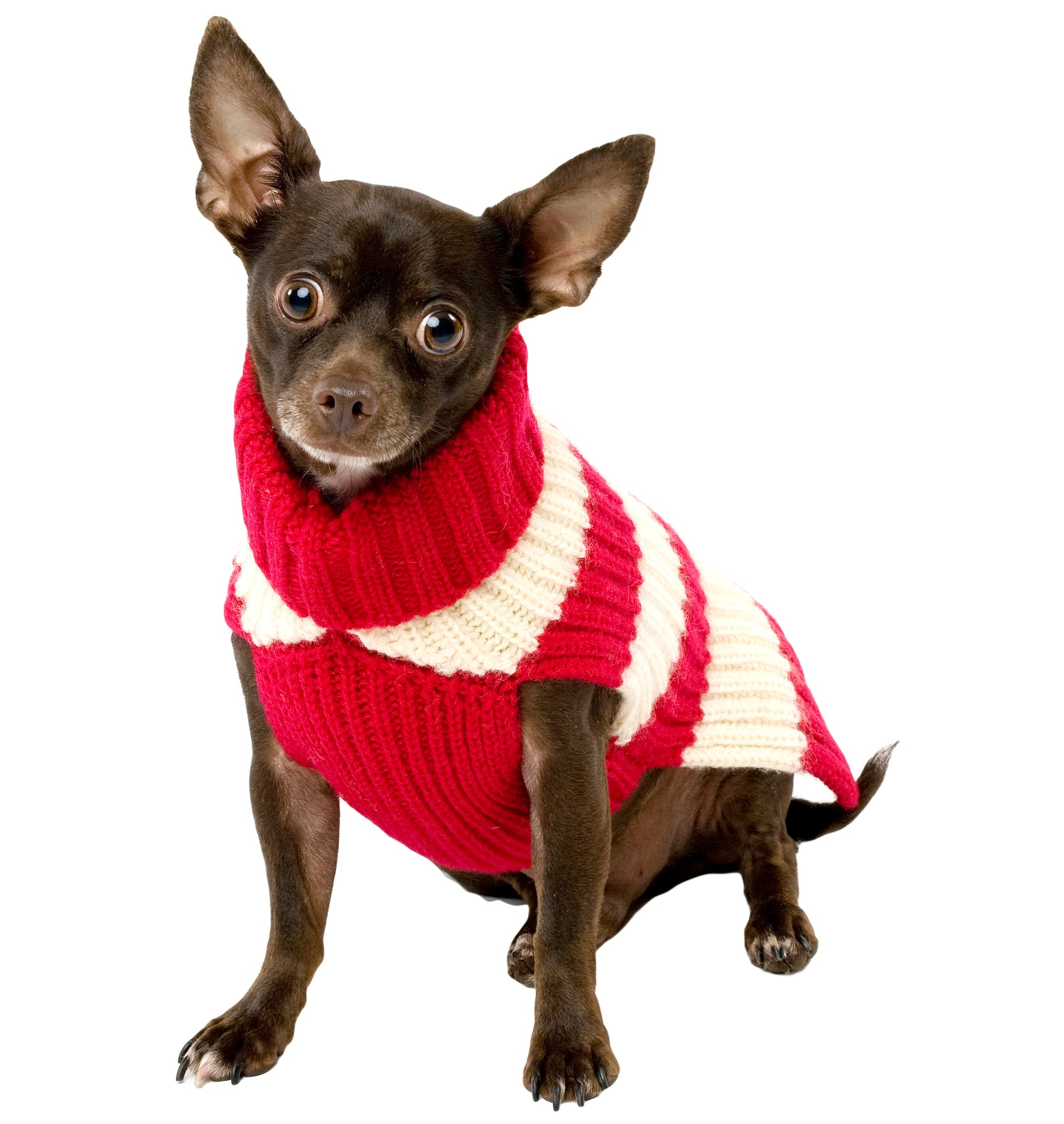 Wool Dog Sweater - Varsity Stripe, 3 Color Options