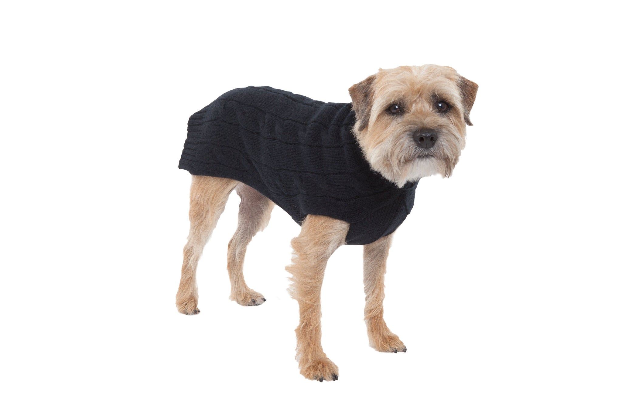 Cashmere Dog Solid Sweater - Black, Red & Orange