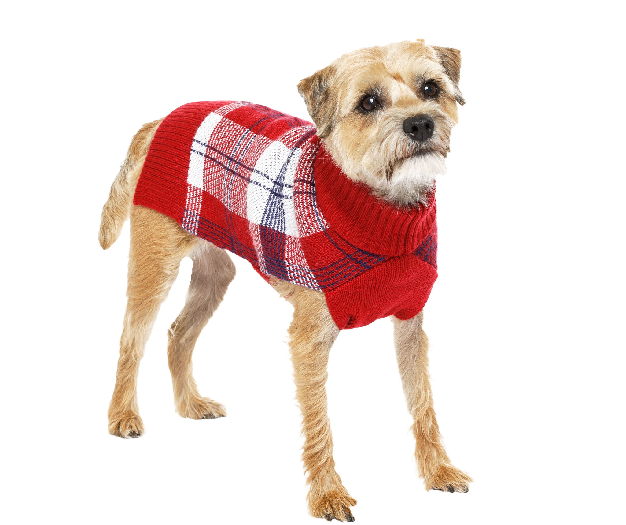 Wool - Blackcomb Plaid Dog Sweaters