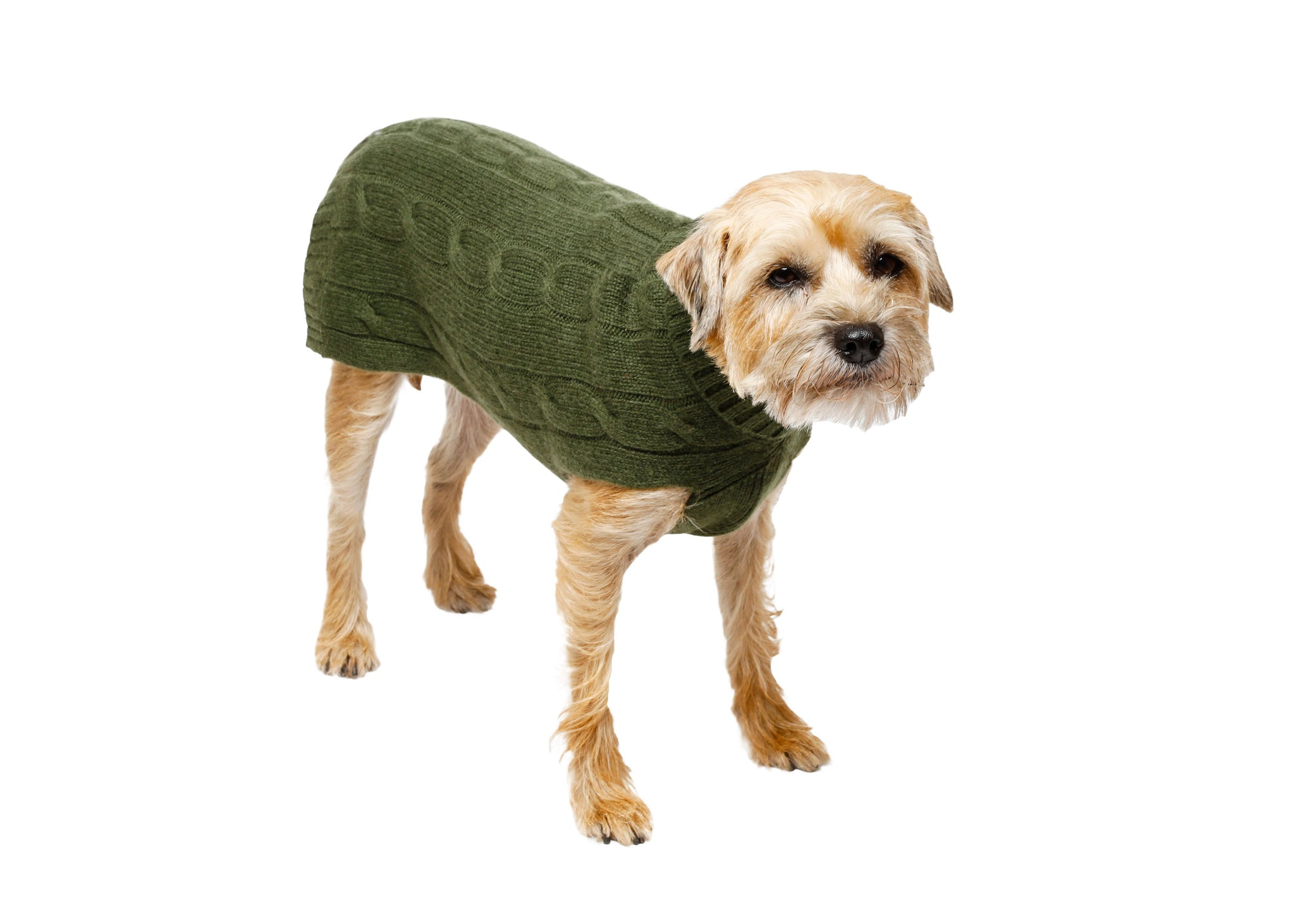 Cashmere Dog Sweater - Brown & Green