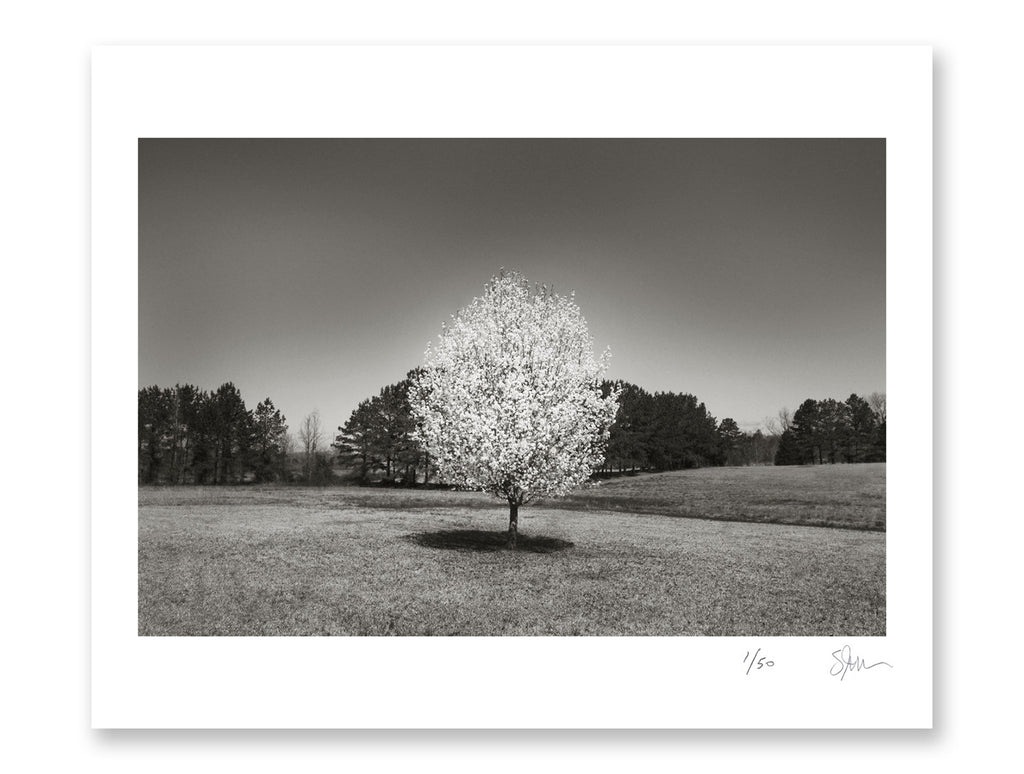 "Some Where Else ""Bradford Pear Tree, Mississippi"" Archival Pigment Print"