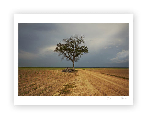 "Some Where Else ""Yazoo City Tree, Mississippi"" Archival Pigment Print"