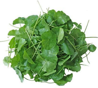 Gotu Kola: Heal your Mind