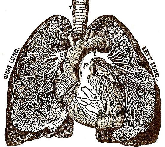 How to Protect the Lungs : ways to heal and regenerate