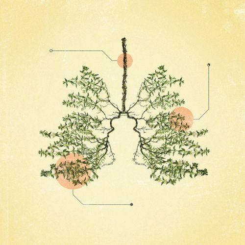 6 Herbs to Protect the Lungs