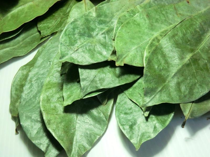 Soursop (Guanabana) leaf powder
