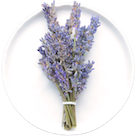 Uproot Ingredient: Lavender