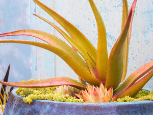 Staff Favorites: Succulent Care, Design and Horticultural Information Resources