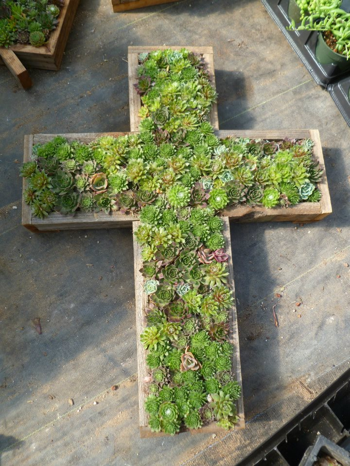 Cross Planter