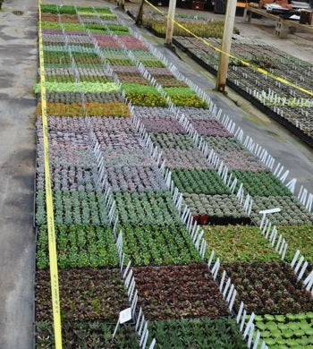 Plants Staged for Garden Show