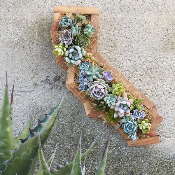 Succulent Gardens Buy Succulents Online Or Visit The Nursery