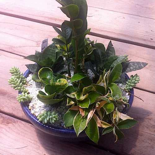 Indoor succulent shade gardens recipes for success succulent gardens - Indoor plants for shade ...