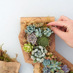 Redwood Succulent Planter | California Planter | Succulent Gardens