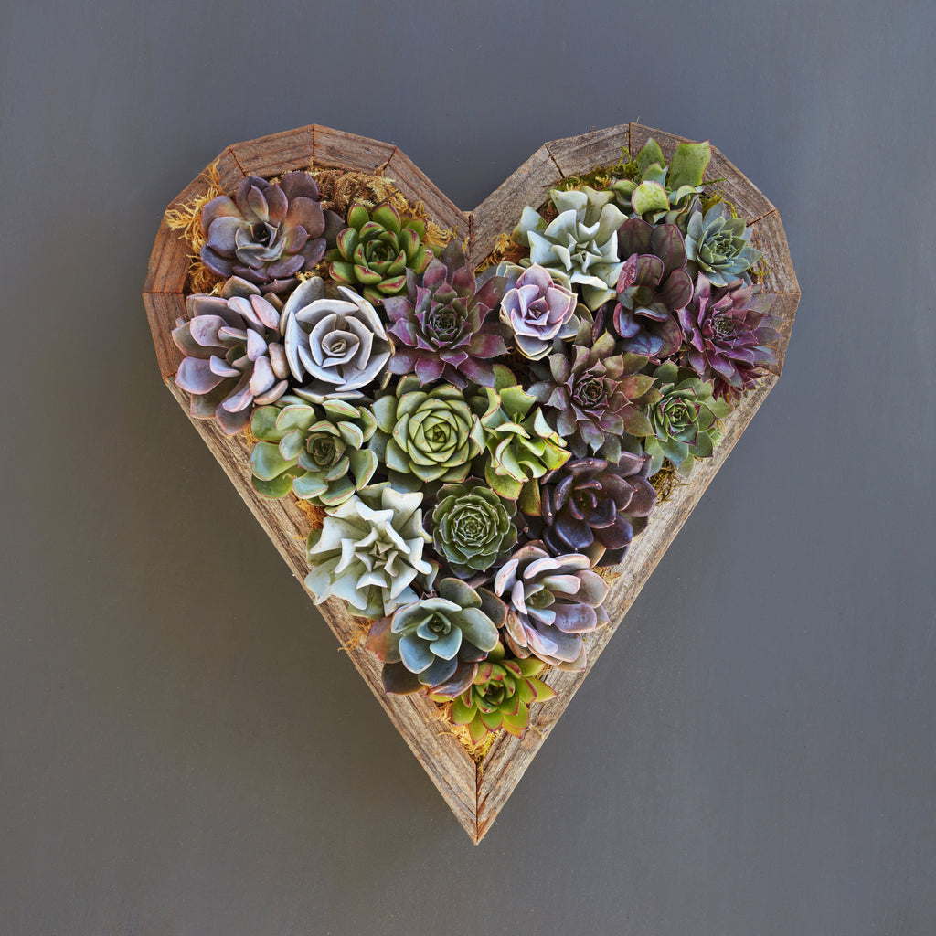 Wedding Centerpieces That Won T Cost You The World Versus: Succulent Gardens