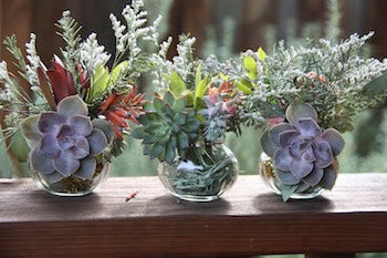Succulent jelly jar ornaments