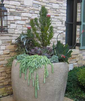 Succulents are well suited to being grouped with other low-water plants in containers.