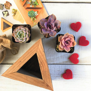 Succulent Triangle Planter Kit