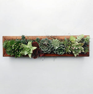 Succulent Centerpiece | Reclaimed Wood Trough