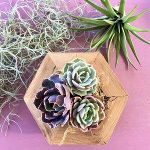 Succulent Hexagon Planter