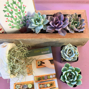 Succulent Trough Kit | Make Your Own Succulent Centerpiece