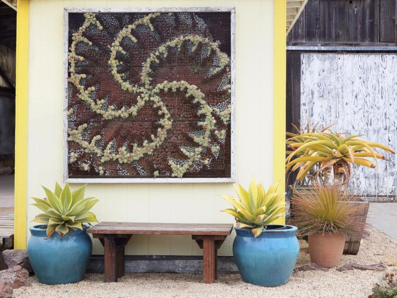 Planted Succulent Living Wall | Succulent Gardens