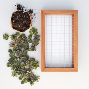 6x12 Succulent Living Picture Kit - DIY Succulent Wall