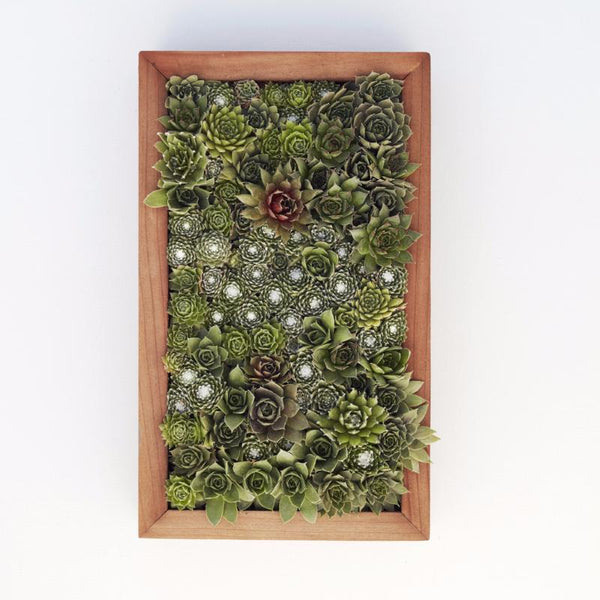 Vertical Gardening With Succulent Living Pictures Succulent Gardens