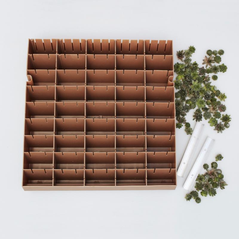 Modular succulent living wall panel kit succulent diy for Living wall panels