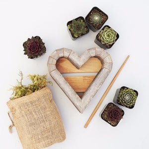 Small Succulent Heart Planter Kit | Succulent Gardens