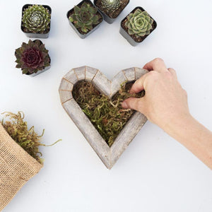 How to Plant DIY Succulent Heart Planter | Succulent Gardens