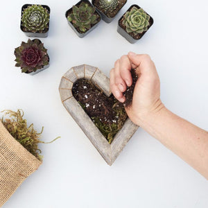 How to Plant DIY Succulent Heart Kit | Succulent Gardens