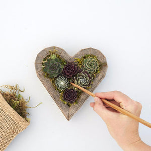 How to Plant Succulent Heart Planter Kit | Succulent Gardens