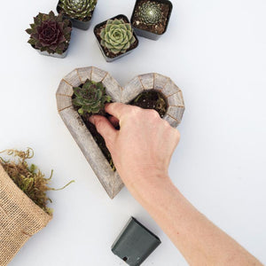 How to Plant Succulent Heart Kit | Succulent Gardens