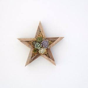 Succulent Vertical Planter Kit - Succulent Wall - Star Planter | Succulent Gardens
