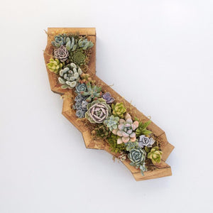 California Succulent Planter - Redwood Vertical Planter | Succulent Gardens
