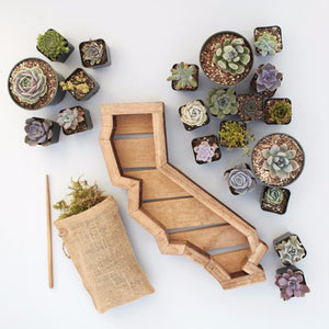 Califorina Succulent Planter Kit | $154.00 | Succulent Gardens