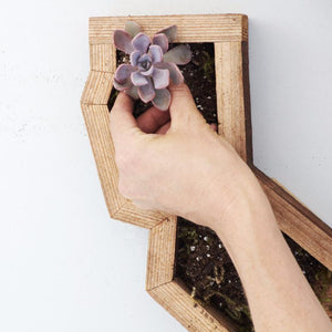 How to Plant a Vertical Succulent Frame | Succulent Gardens