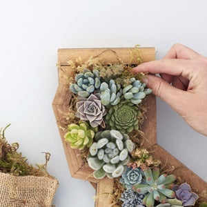 Using Moss to Finish a Succulent Planter | Succulent Gardens