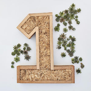 Large Succulent Number Kit | DIY Succulent Gift | $139.00