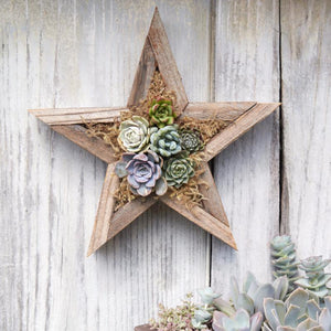 Redwood Star Planter