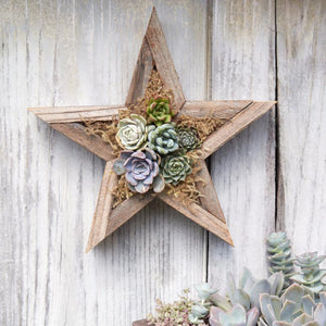 Succulent Holiday Gift | DIY Succulent Kit | Succulent Gardens