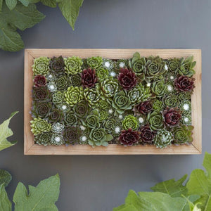 Succulent Living Picture - Vertical Succulent Garden - DIY Succulent Living Picture - Sempervivum