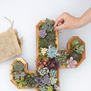 How to Plant a Succulent Wall Planter - Succulent Gardens - Cactus Planter